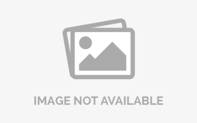 Nylon Dog Collar - Cream Navy XLarge