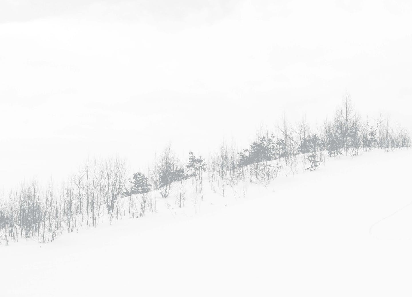 snowy wooded landscape