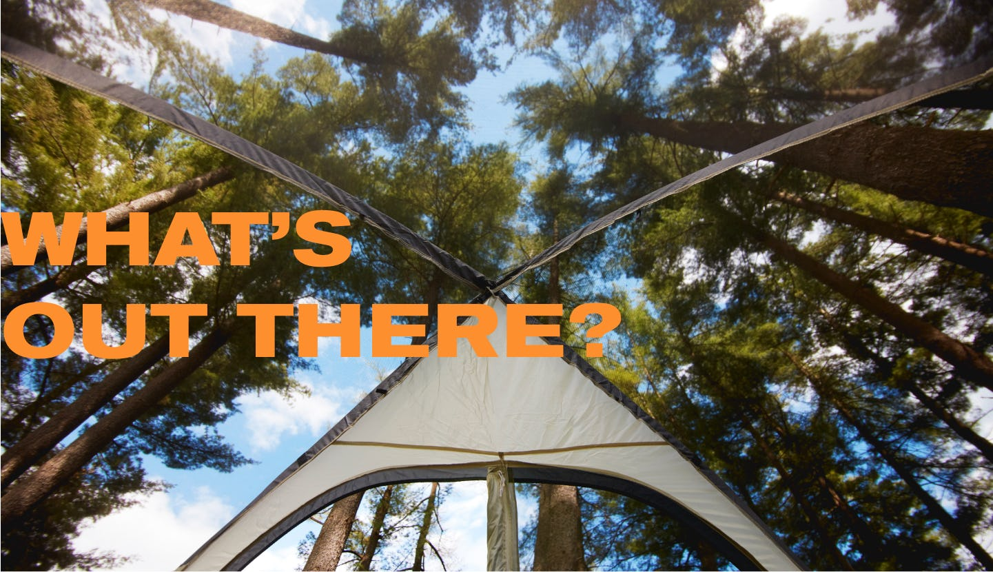 Lying in a tent, looking up through the mesh at the tree-lined canopy
